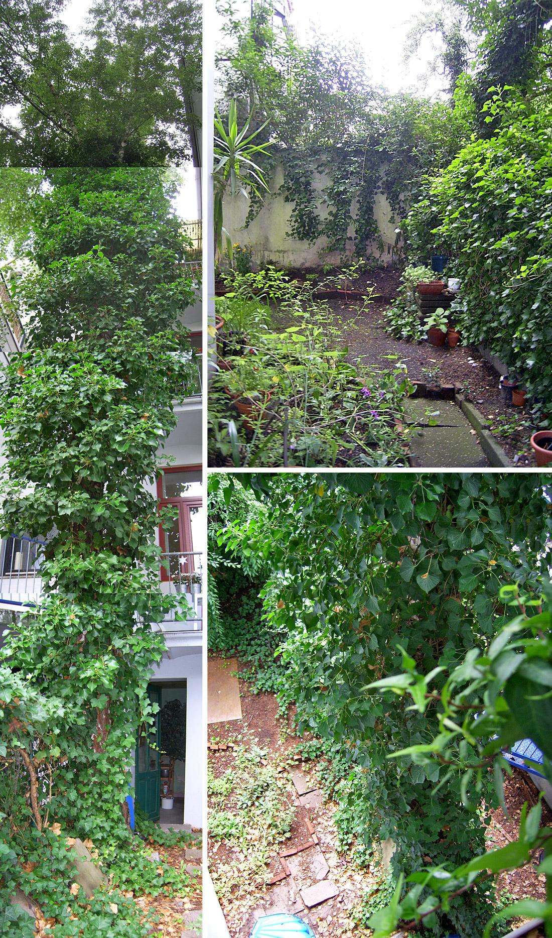 Der Garten nach dem Kauf mit der großen Birke