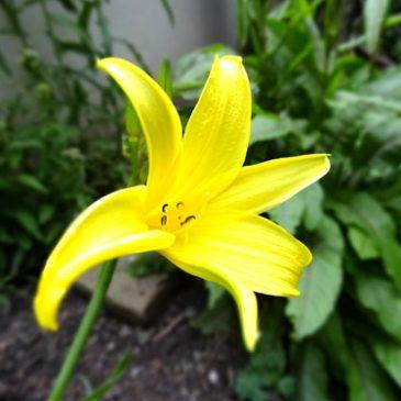 Frühlingsgarten: Saisonstart