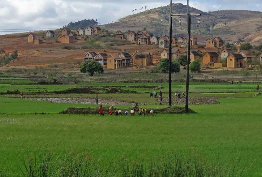Reisanbau in Madagaskar