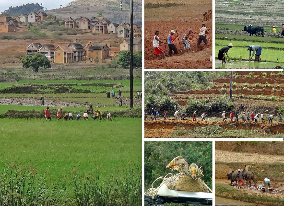 Bauern und Tagelöhner auf dem Land