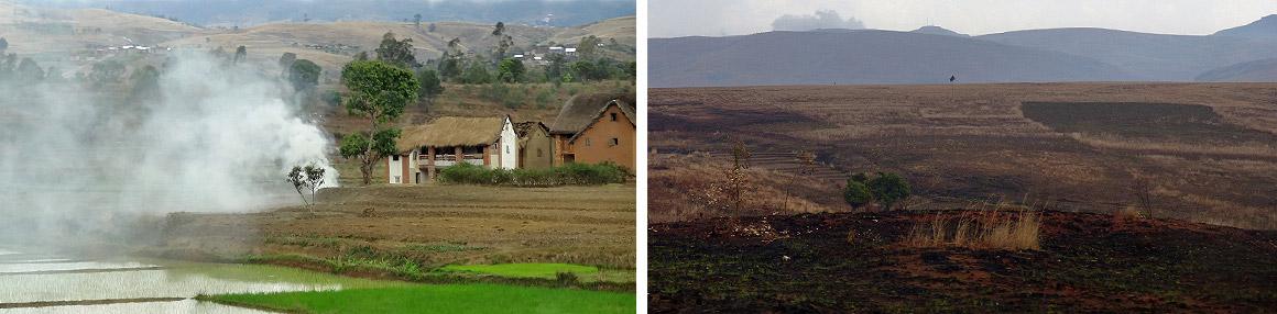 Abholzung und Brandrodung prägen die Landschaft