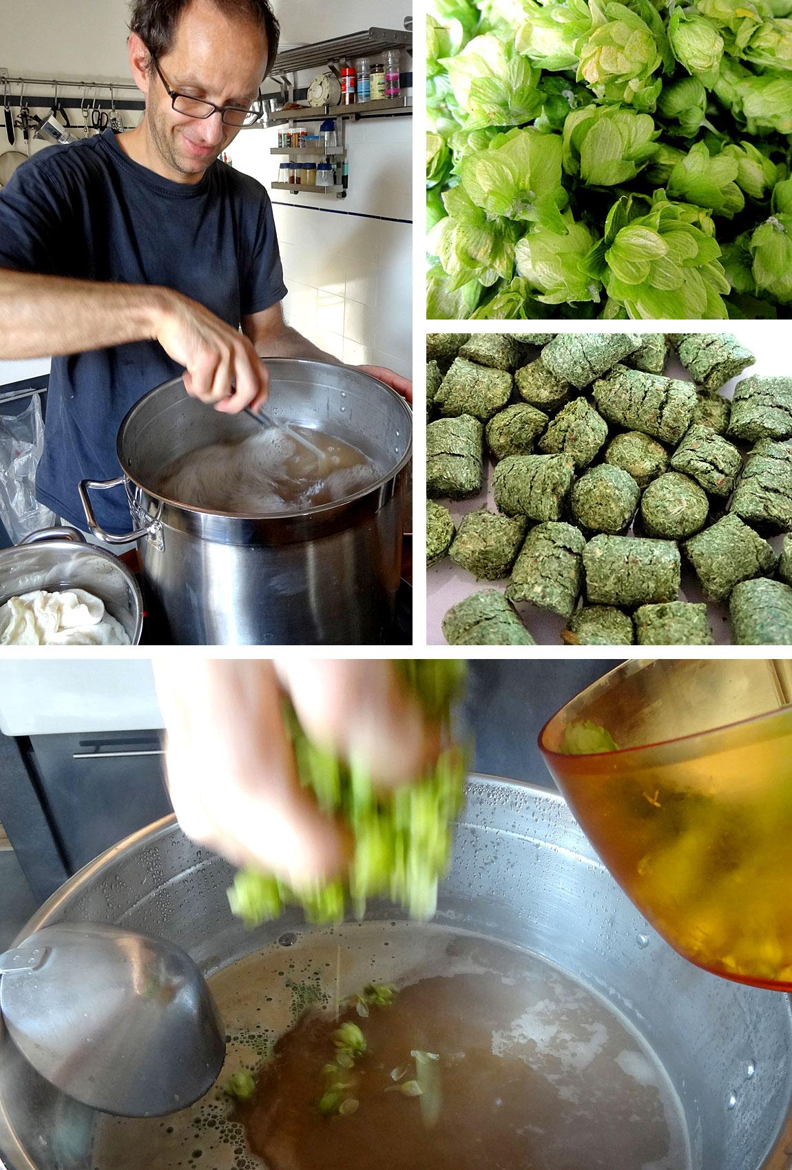 Würze kochen und Hopfen hinzugeben - oben der Aromahopfen aus dem eigenen Garten, unten der gepresste Bitterhopfen