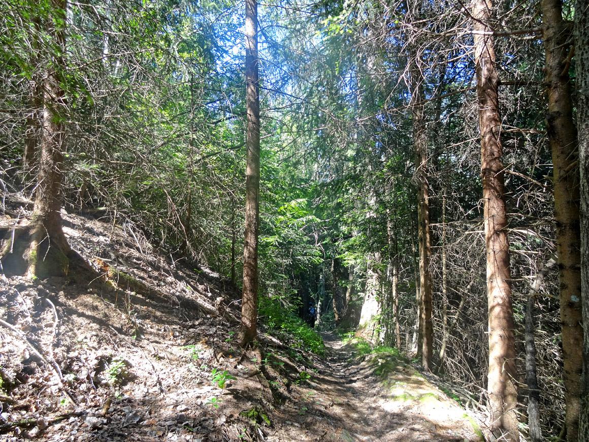 Lichte Wälder