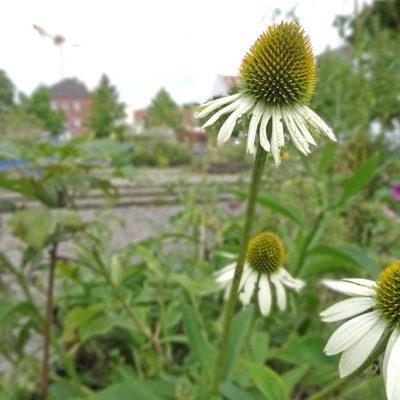 Wilder Stadtgarten