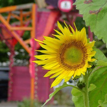 Urban Gardening mit Lucie