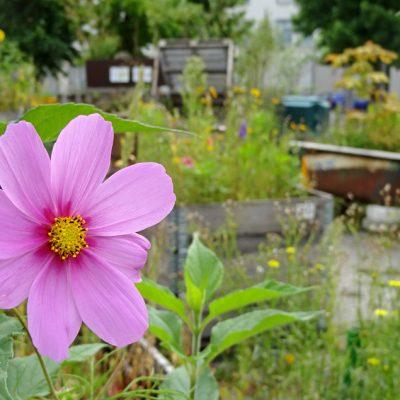 Schöne Blüten im wilden drumherum