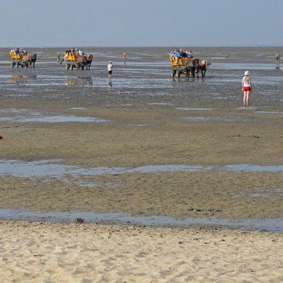 Typisch Cuxhaven: Wattwagen kommen von Neuwerk zurück
