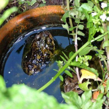 Eine Badewanne für einen Frosch