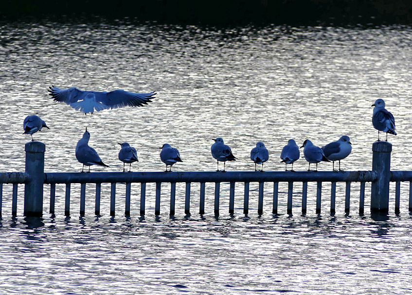 Vogel-Reihe