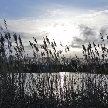 Winter, Weihnachten, Werdersee