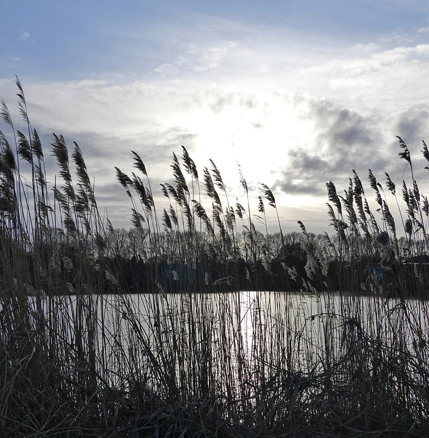 Gräser vor Kleiner Weser
