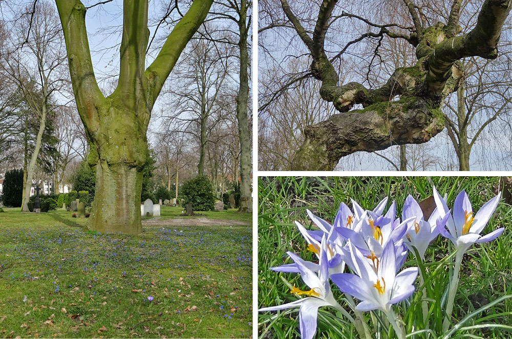 Naturidylle auf dem Friedhof Buntentor