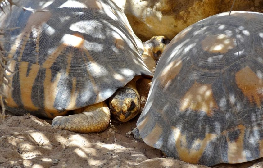 Schildkröten im Arboretum