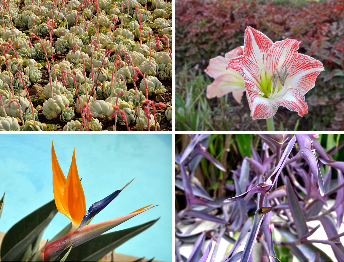 Schöne Pflanzen in gepflegten Hotelgärten