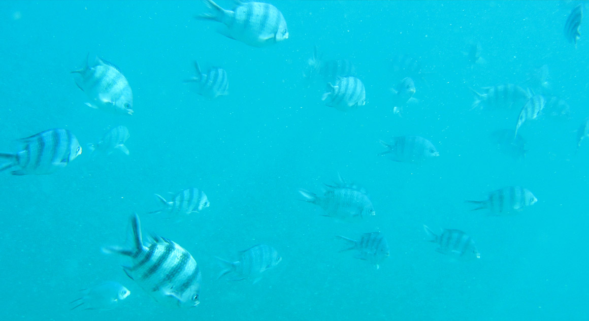 Juhuuu, Fische!
