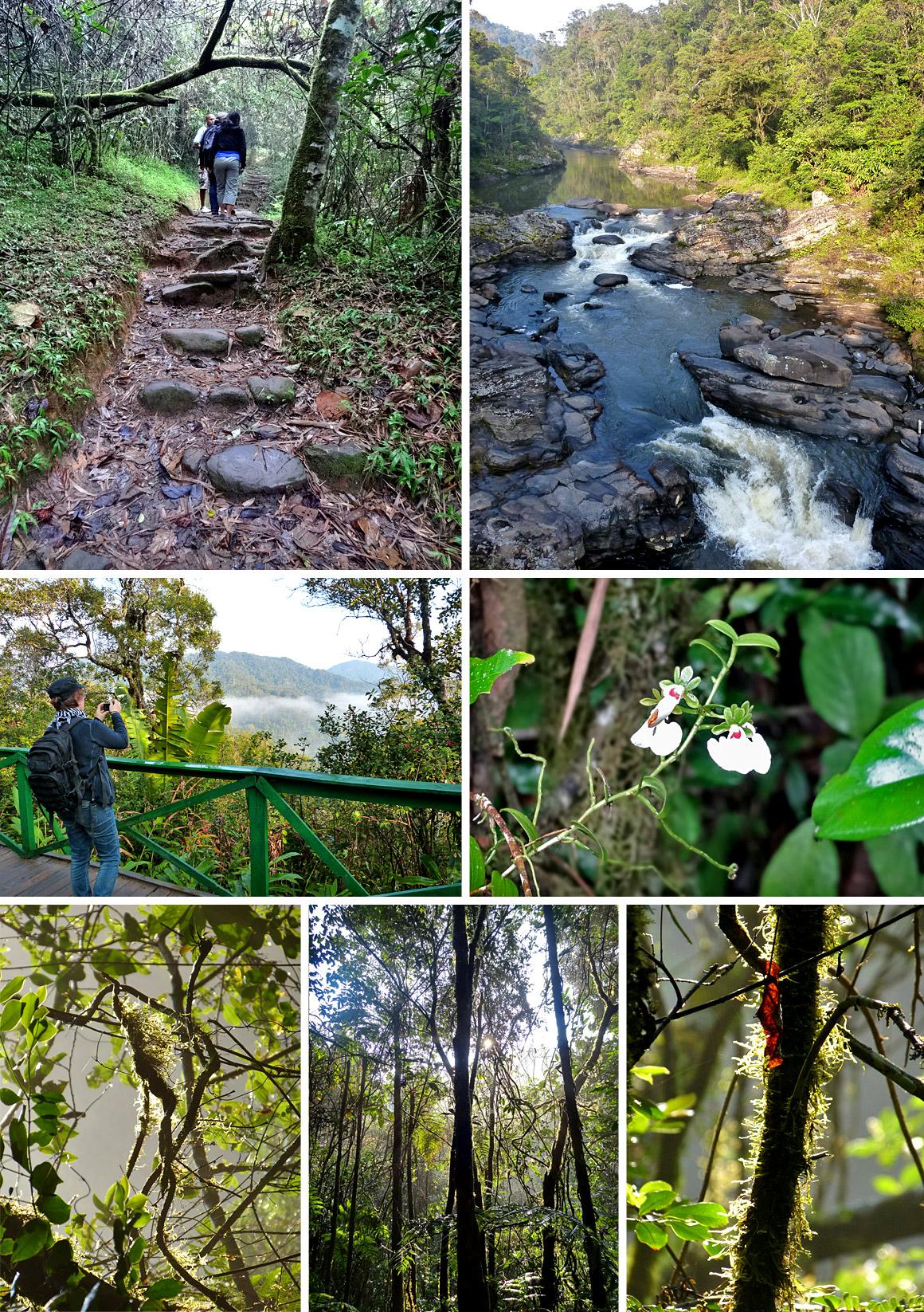 Trekking in Ranomafana