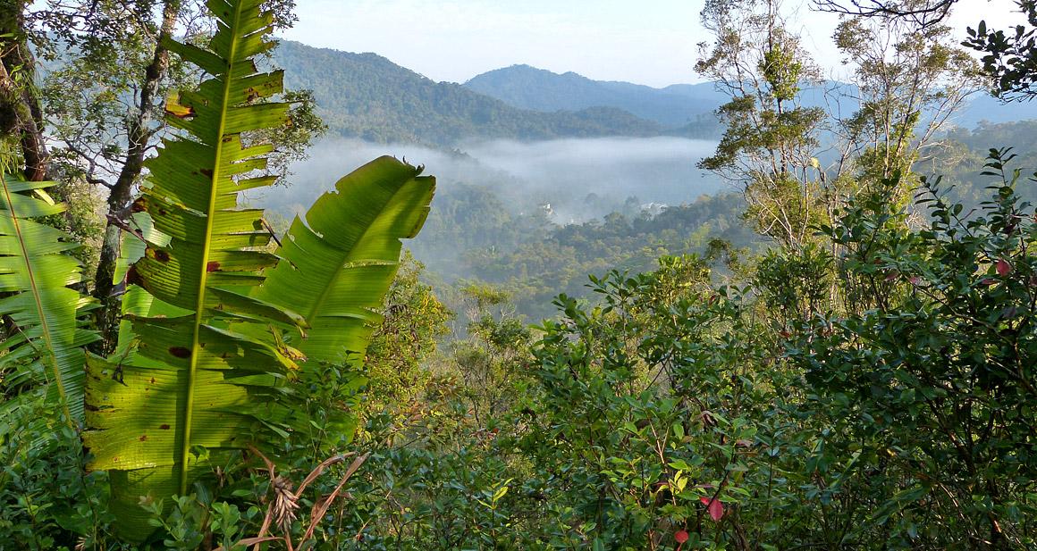 Regenwald in Madagaskar - Ranomafana