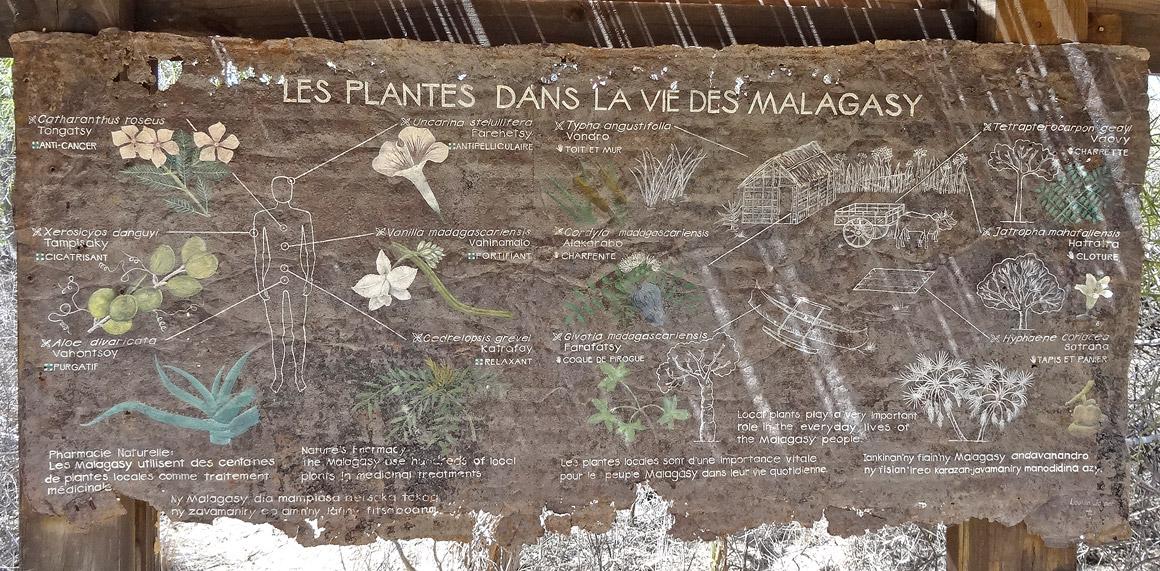 Die Pflanzen im Leben der Madagassen