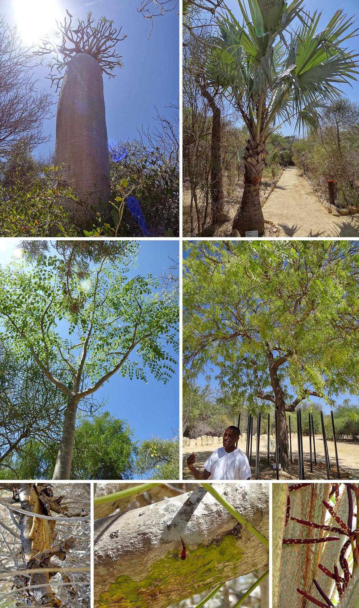 Wundersame Bäume