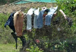 Der endemische Wäschebaum