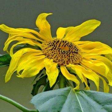Blütenpracht in gelb-orange