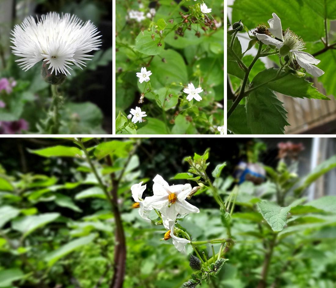 Bienen, kommt zur weißen Blütenpracht