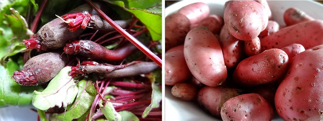 Rote Beete und Kartoffel Cherie