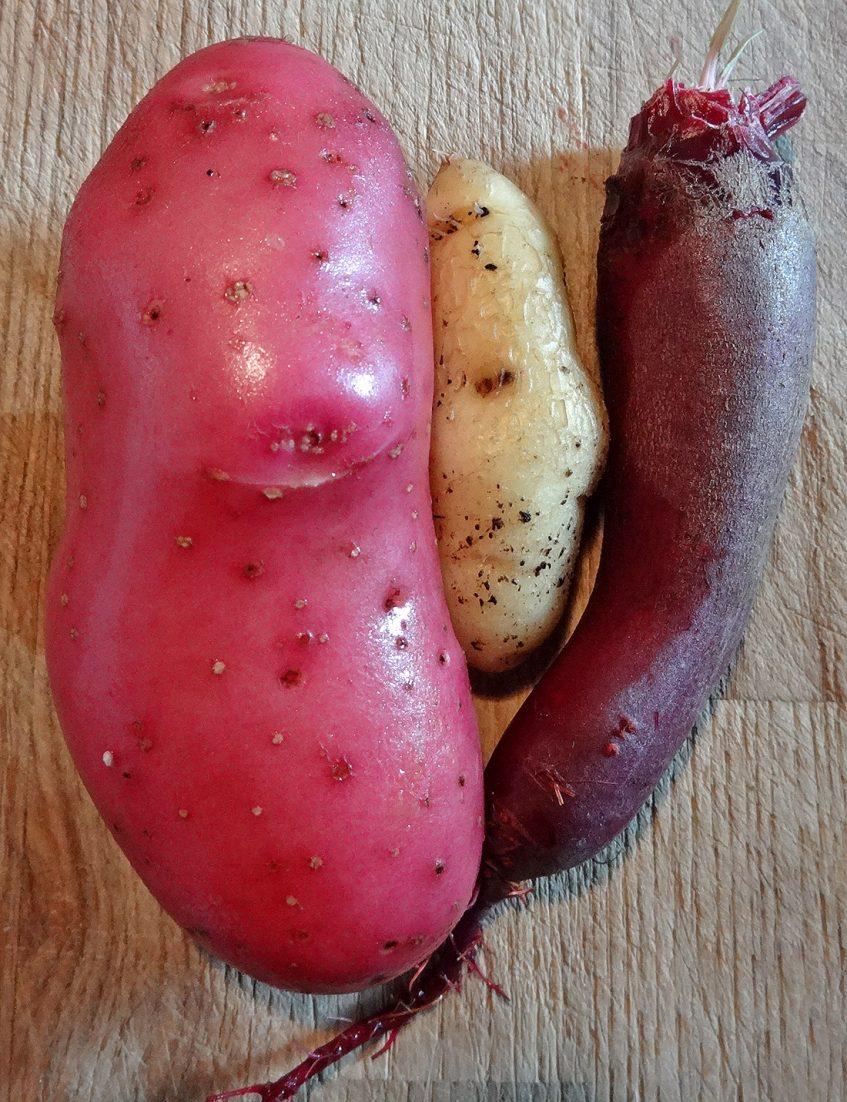 Kartoffel Cherie und Rote Beete umarmen La Ratte d´Ardeche