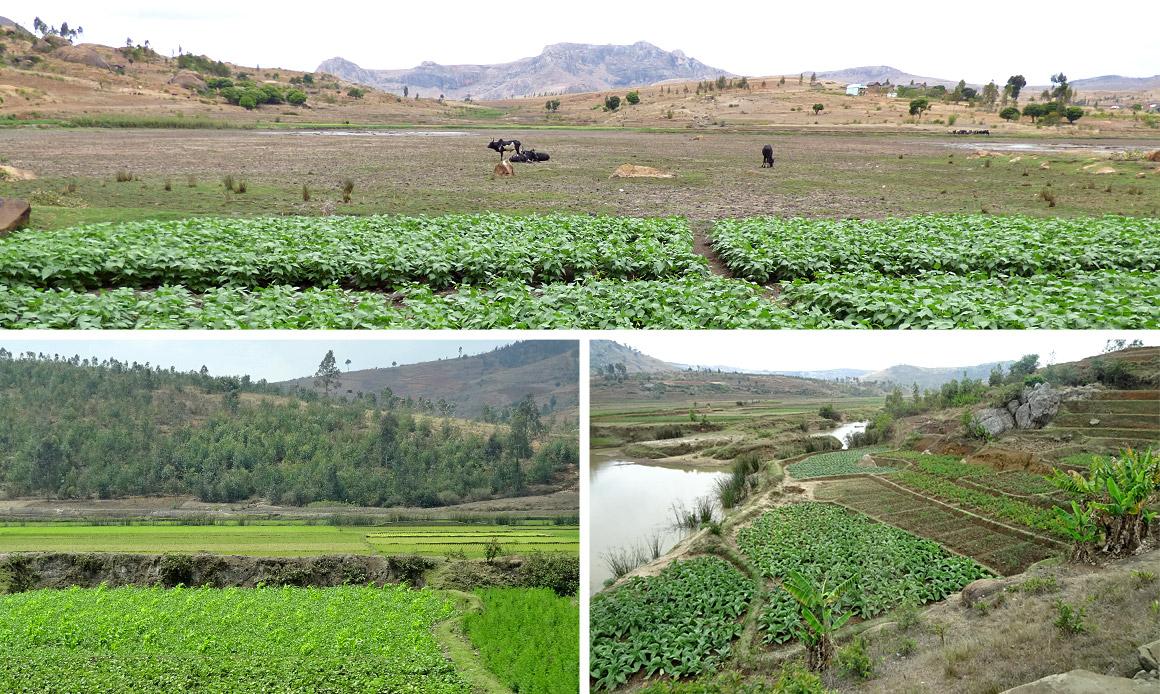 Reis, Heilpflanzen, Gemüse - hier gedeiht vieles