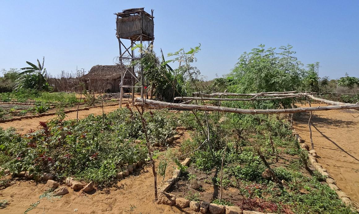 Bio-Gemüsegarten nach madagassischem Geschmack