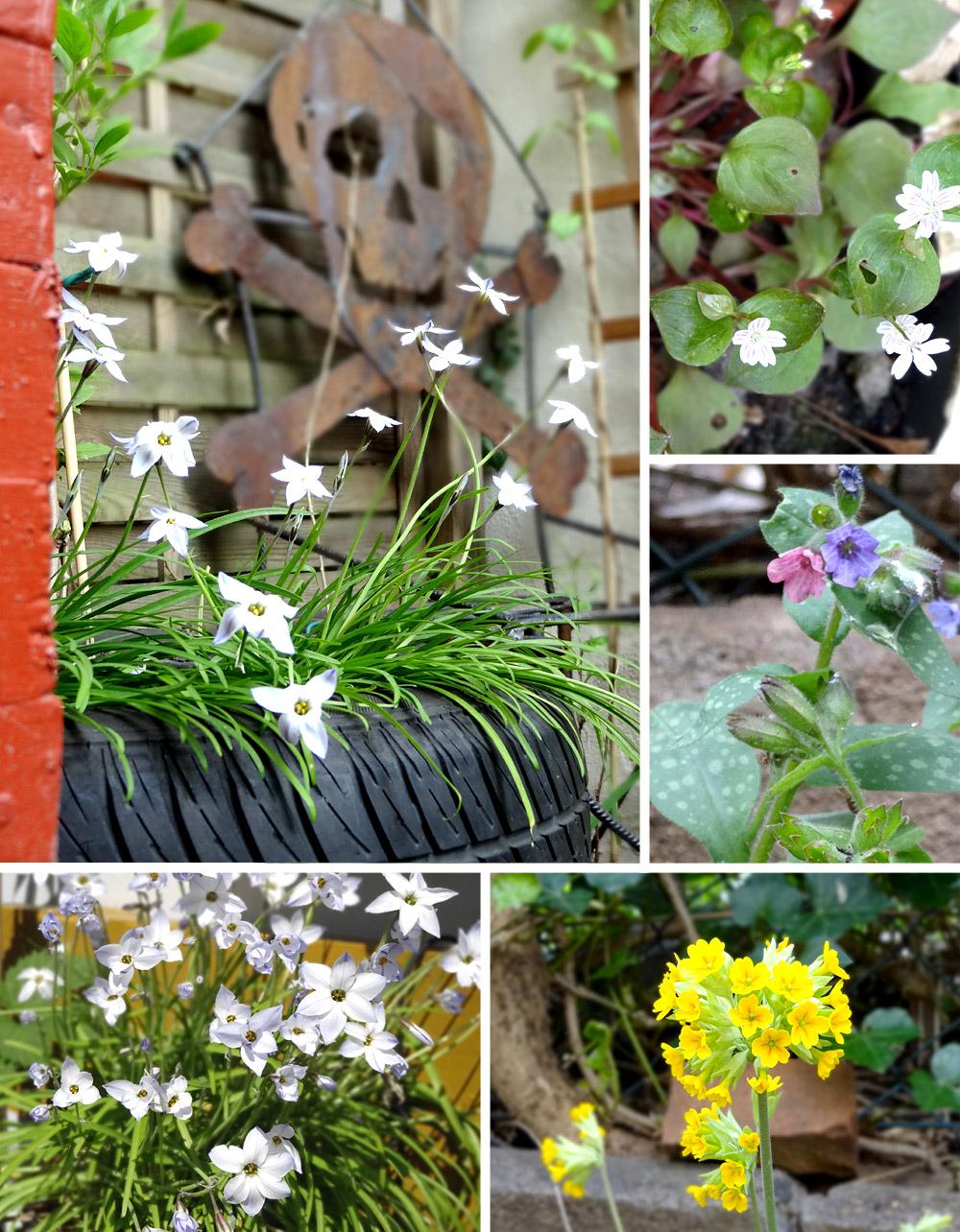 Frühjahrsblüher: Kräuter und Heilpflanzen