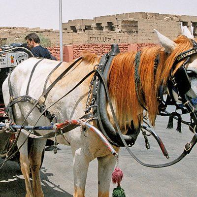 Luxor - Kutschfahrt mit lustigem Pferd