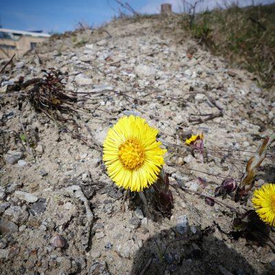 Blume und Baustelle - Stadtwerder