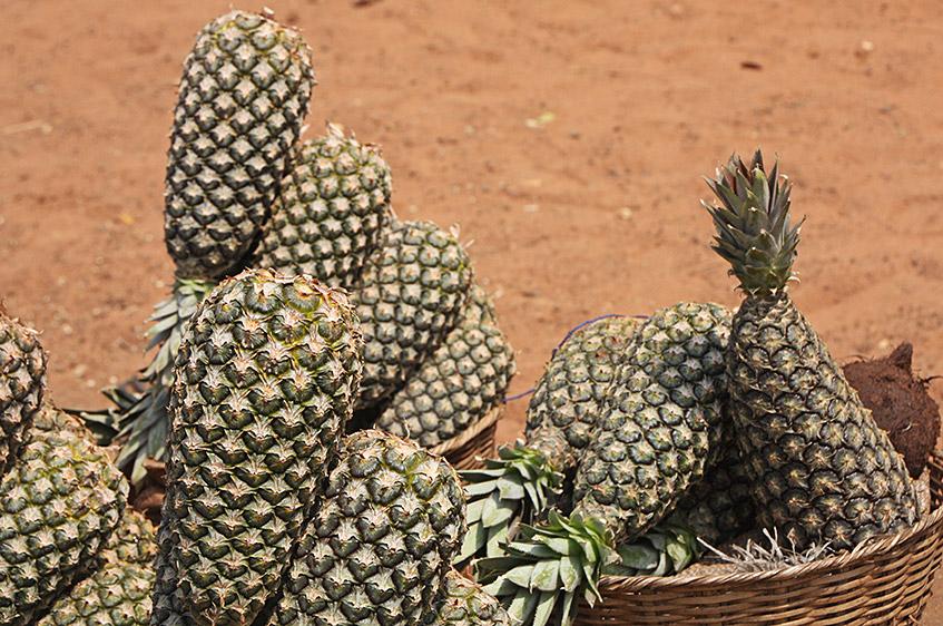 Die besten Ananas der Welt