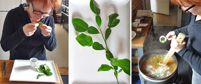 Zupfen der Kaffir-Limetten-Blätter