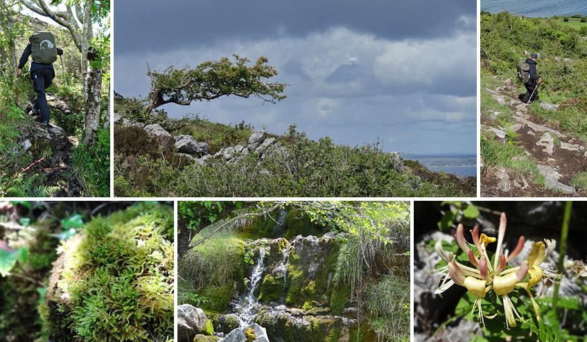 Bergiger Loop mit viel Flora