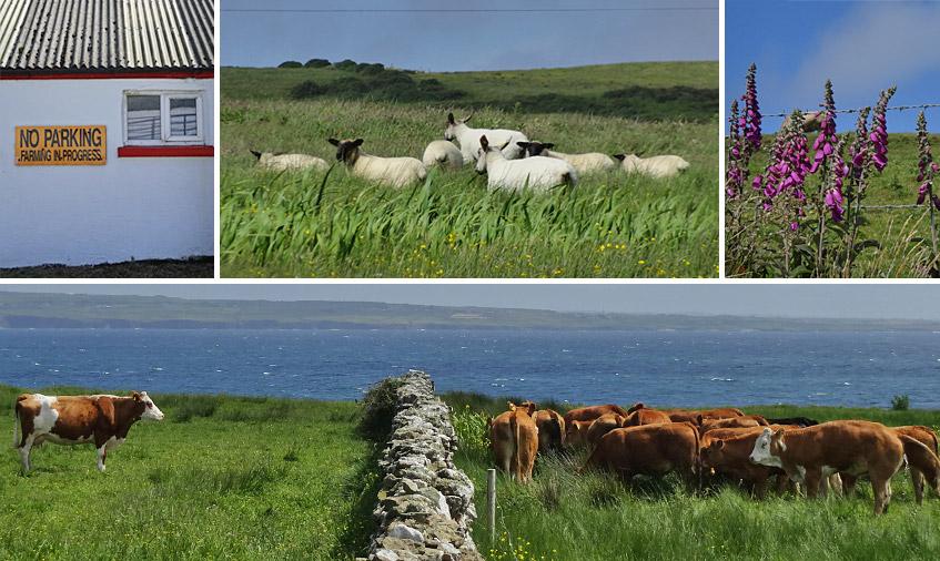Landwirtschaft im platten Land