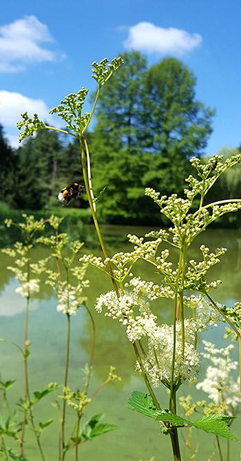 Natur im Bürgerpark Bremen
