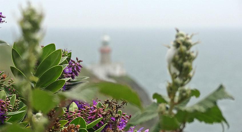Blumen und Leuchtturm in Howth