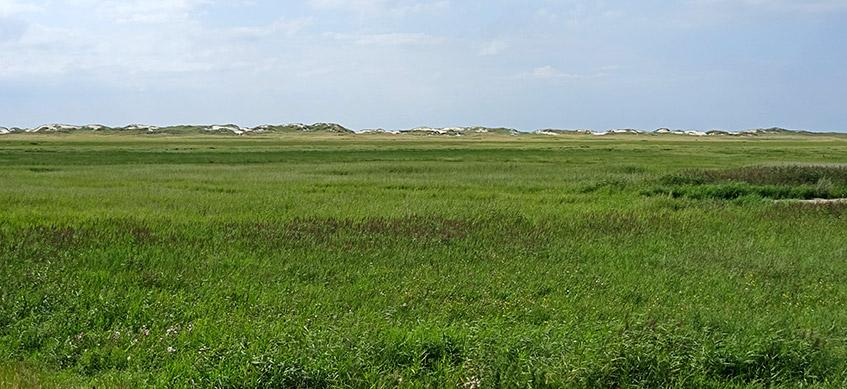 Schöne grüne Salzwiesen