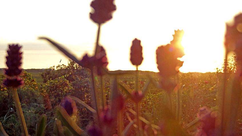 Lavendel-Deko vor untergehender Sonne