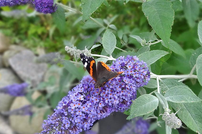Oh wie schön, ein Schmetterling!