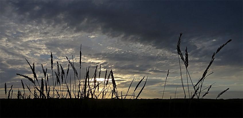 Gräser vor Abendhimmel