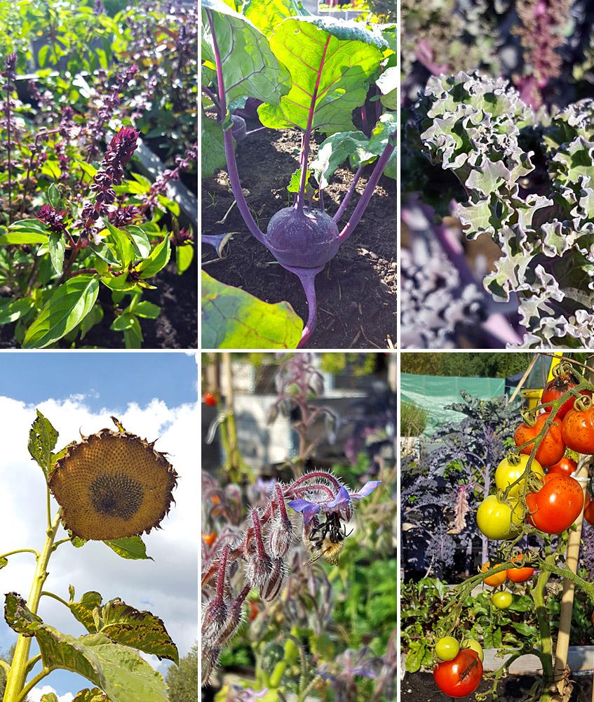 Gemüse und Kräuter und Bienen