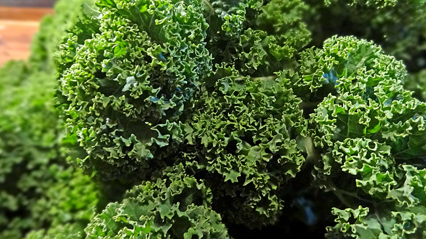 Grünkohl am Strunk - frischer gehts nur aus dem eigenen Garten
