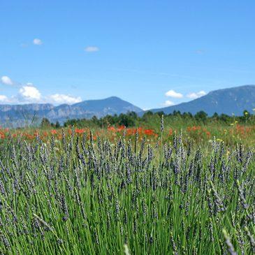 Roadtrip durch die Provence – Urlaub für die Sinne