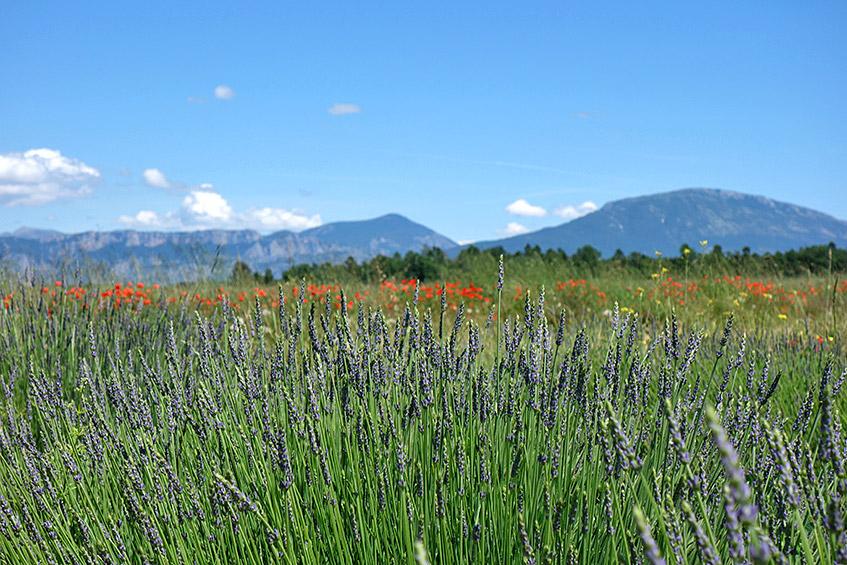 Die Provence - ein Traum aus Licht, Farben und Düften