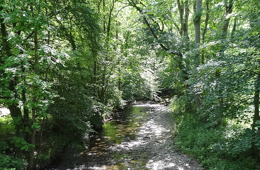 Viel Wald, wenig Wasser