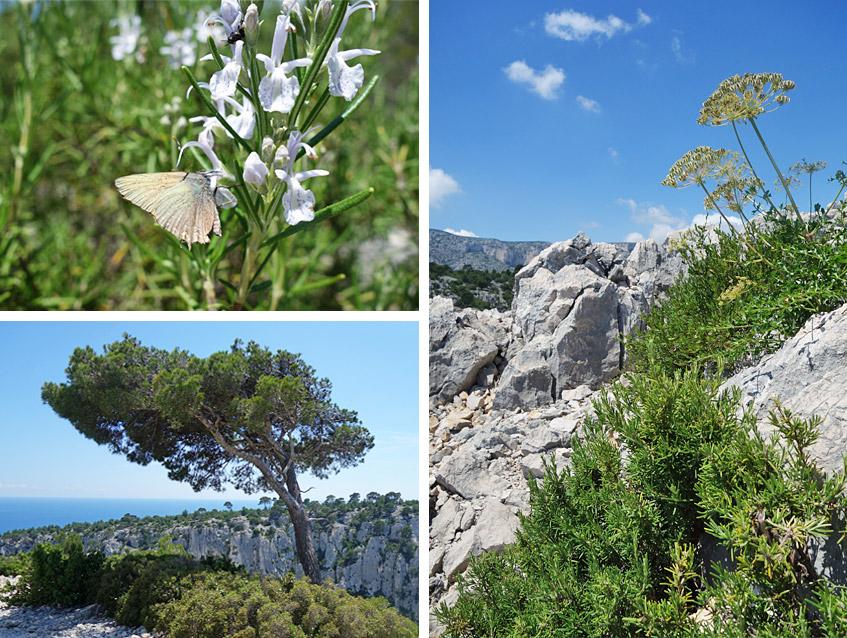 Wilde wunderschöne Natur - und Rosmarin überall