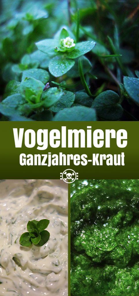 Vogelmiere - Ganzjahres-Kraut